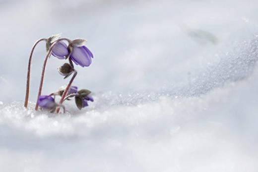 南德州30年来首降雪 居民:圣诞奇迹