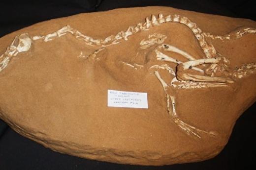 考古发现四不像恐龙物种 超出科学家想像