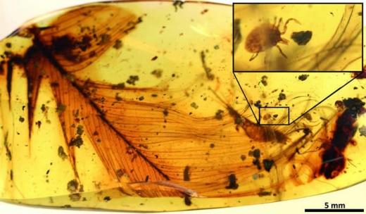 9900万年前的琥珀显示 即使是恐龙也避不开蜱虫
