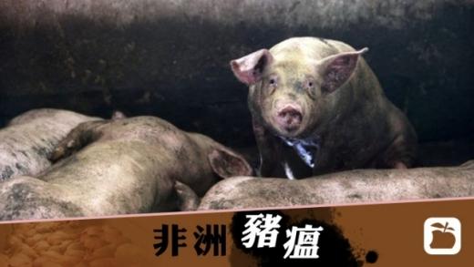 湖南永州爆非洲猪瘟 270只病发170只死